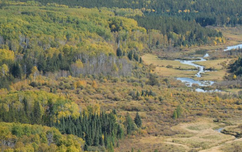 Mystik Forest Management